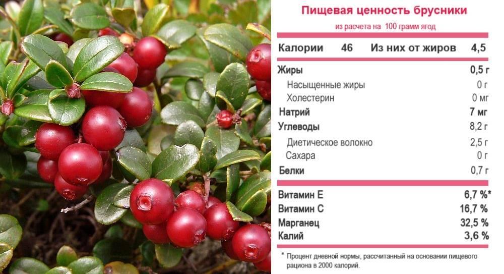 Использование брусничного листа и ягод брусники в детском меню