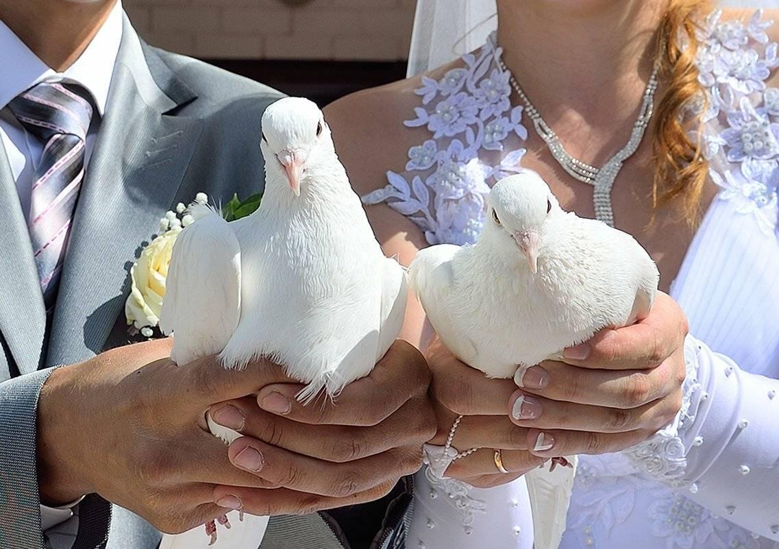 Голуби на свадьбу — вечная любовь и преданность