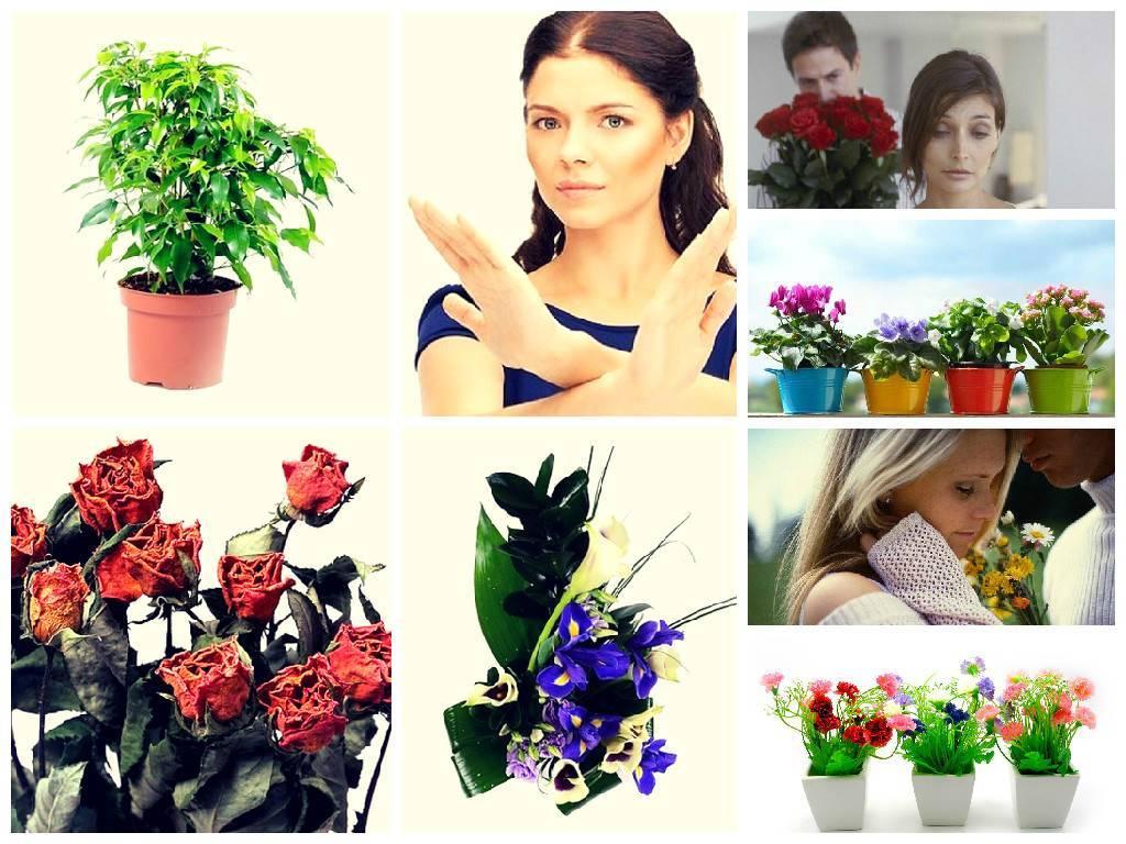 Как не заблудиться в цветочном разнообразии, или Какие цветы подарить девушке