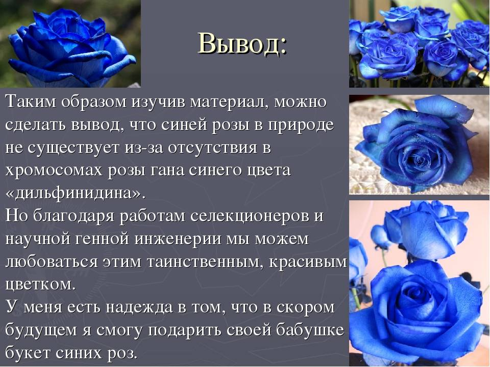 Цвет роз: значение и тайный смысл