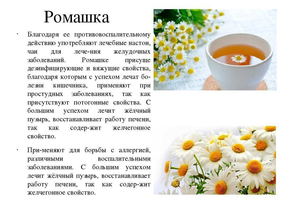 О пользе ромашкового чая для детей