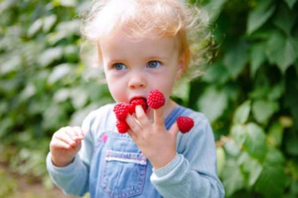 Оптимальный возраст для введения малины в рацион ребенка