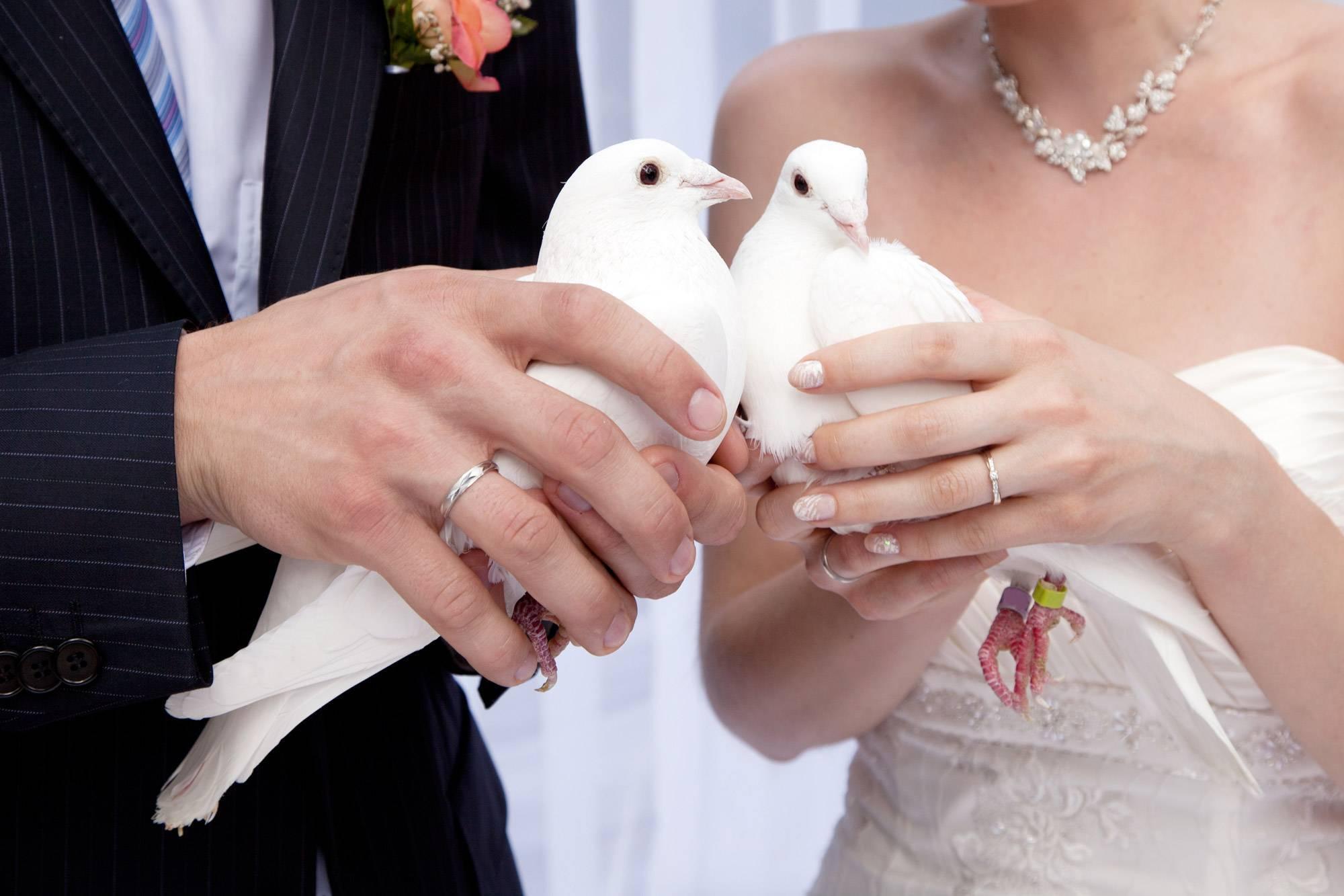 f451bfee9503e0b2613d7b75a8bd23cc - Комичные ситуации на свадьбе.